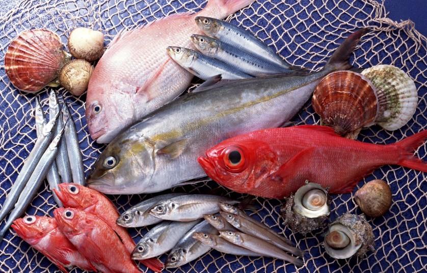 рыбы разных видов