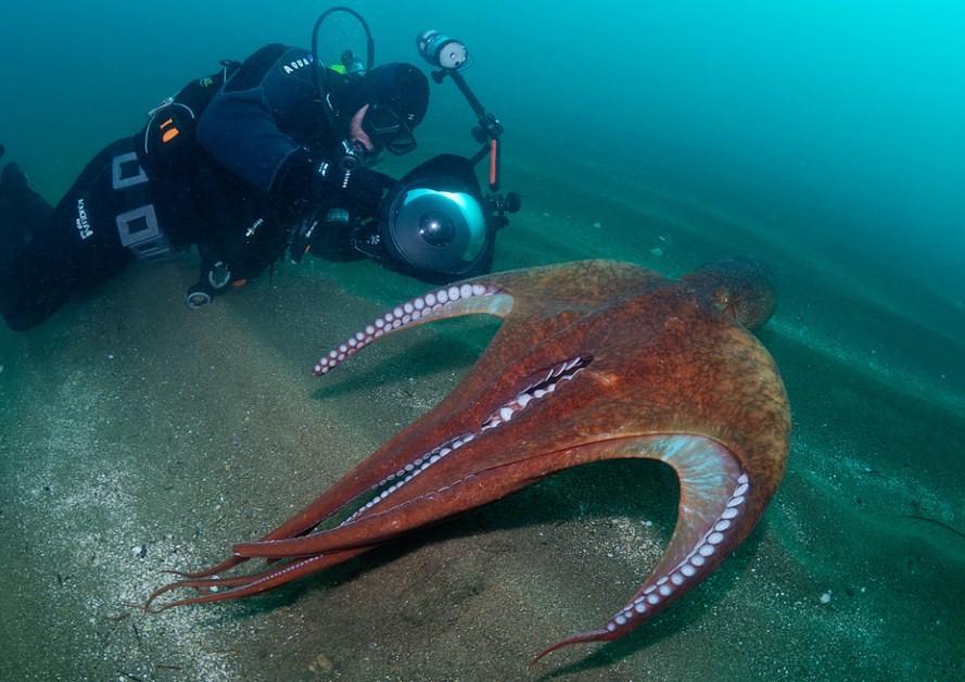 осьминог с семью щупальцами