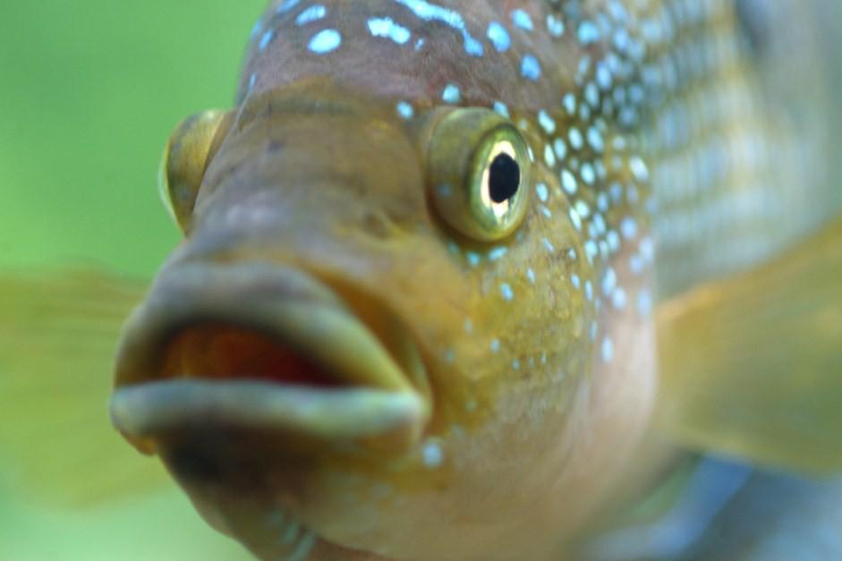 зачем рыбам пить воду