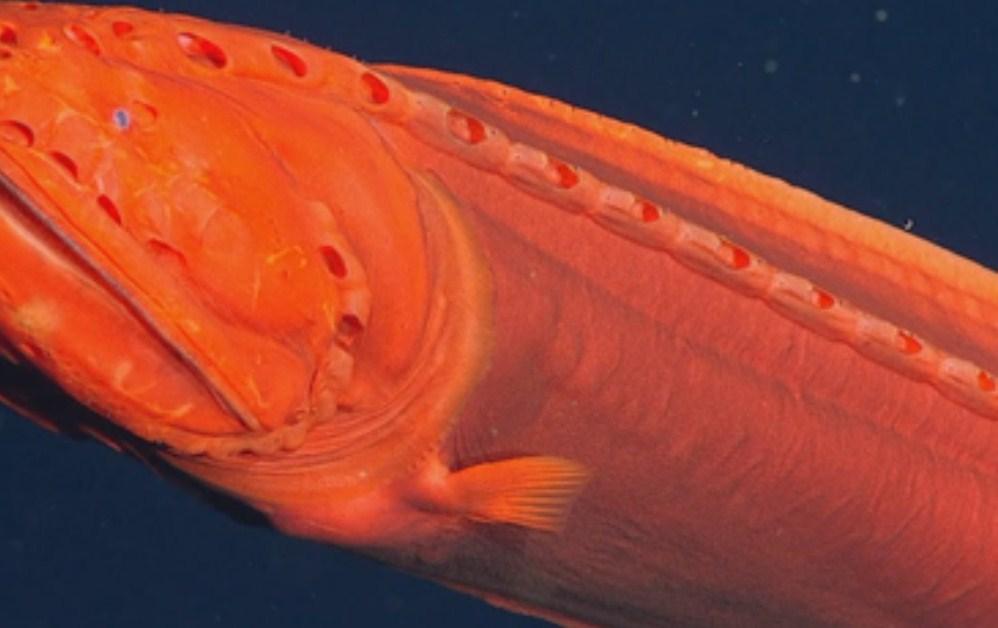 китовая рыба