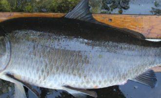 какие рыбы считаются долгожителями