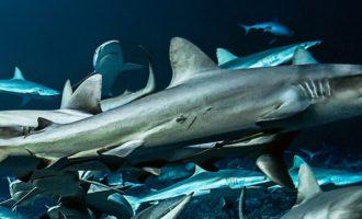 какие бывают особенные акулы