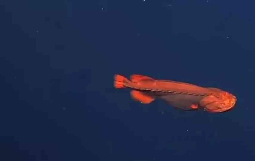 внешний вид рыбы оборотня