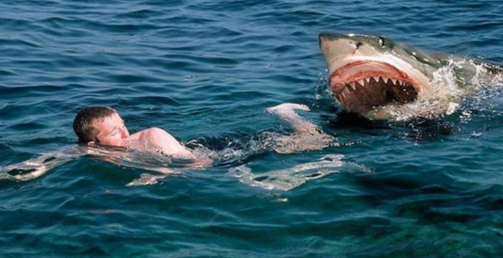 что делать если акула атакует