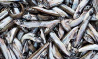 популярная рыба мойва