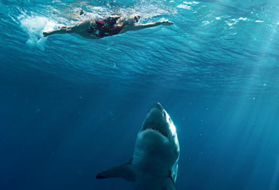 насколько акулы опасны для человека