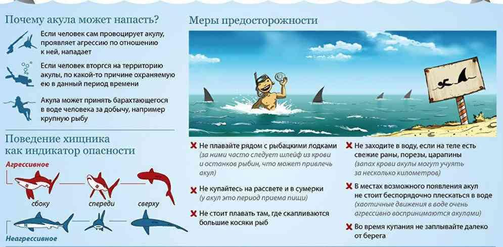 почемунападают акулы на человека