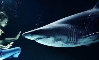 можно ли выжить встретившись с акулой