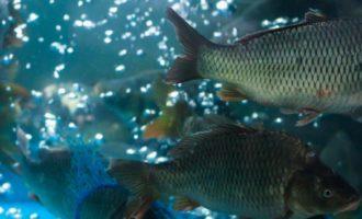 как выбрать живую рыбу